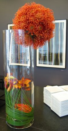 Pincushion protea ball Tablescape Centerpiece www.tablescapesbydesign.com https://www.facebook.com/pages/Tablescapes-By-Design/129811416695