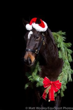 images of christmas horses | Christmas Horse | Alexandra Feeney Equine