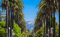The official place for things to do in Los Angeles. California Vacation, California Dreamin', Wonderful Places, Beautiful Places, Los Angeles Vacation, Los Angeles Hollywood, Hollywood Sign, City Of Angels, Studio City