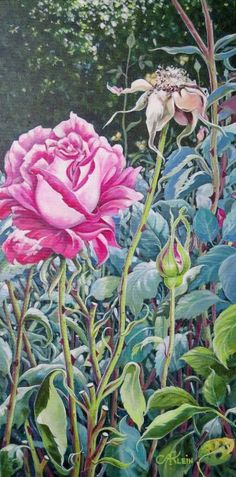 Gallery 4 - Art of Anita Klein Favorite Subject, Canadian Artists, Still Life, Vibrant Colors, Landscape, Rose, Floral, Flowers, Plants