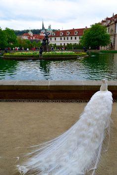 Wallenstein Garden - Prague