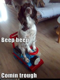 beep beep. Cute even if the person doing the photo can't spell!