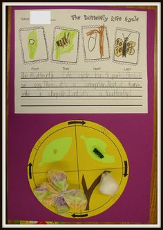 Today In First Grade: The Butterfly Life Cycle and March Quilt