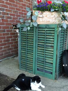 Shabby Shutters hiding the air conditioner. Shabby drawer cut down for a flower box.