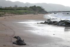 Buncrana is the largest town in Inishowen beside the beach you will find coastal walks and play park Coffee Van, Ice Cream Van, Small Cars, Car Parking, Walks, Beaches, Coastal, Activities, Play