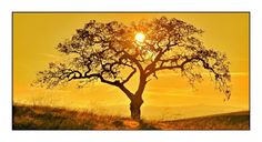 Sun Tree by Earl Bates on 500px