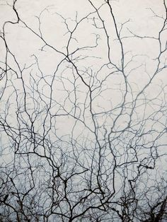 . Melancholy, Mythology, Neurons, Natural Forms, Illustration, Tree Art, Textures Patterns, Black And White Photography, Art Photography