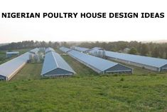 From 5000 birds Customer lays foundations Automated feeding and drinking Poultry Farming, Poultry House, Drinking, Birds, House Design, Chicken, Agriculture, Hen House, Beverage