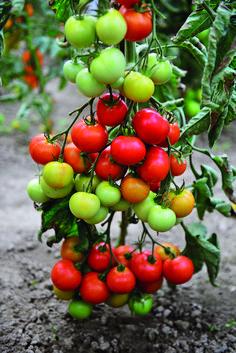 Potager Garden, Garden Landscaping, Planting Flowers, Flora, Stuffed Mushrooms, Landscape, Vegetables, Fruit, Plants