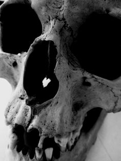 My art teacher keeps a skull in her classroom  so I had a little photo shoot with it.  (Skull 1)