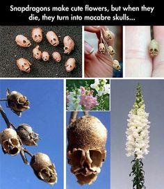 Creepy flowers.