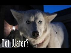 It's hot out there folks. Please make sure all pets have plenty of water.... It's up to you.  Ultimate dog tease: Dog eating water - please share.