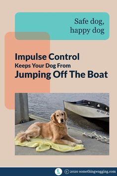 The scariest thing when you're having fun on your boat is if your dog jumps off unexpectedly. Here's how to keep them onboard. Sailboat Living, Living On A Boat, Dogs On Boats, Kinds Of Dogs, Pet Travel, Crazy Dog, Dog Training Tips, Happy Dogs, Health And Safety