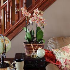 Salmon Orchid Planter