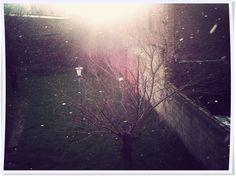 Promesa de nieve hoy a la mañana.   #100happydays #day88