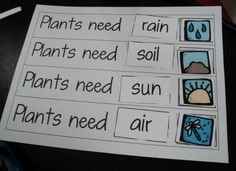 Plant Needs | Special Kind of Class: What Plants Need