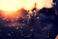 """""""O vento é o mesmo. Mas sua resposta é diferente em cada folha. Aprendi com as Primaveras a me deixar cortar para poder voltar sempre inteira."""" Cecília Meireles"""