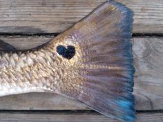Texas loves their Redfish! -