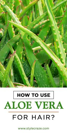 Aloe vera for hair treatment is one of the best ways to mositurize and care at the same time. Here are some ways that you can use aloe vera for hair. Read on to know more (Best Shampoo Aloe Vera) Aloe Vera Gel For Hair Growth, Aloe Vera For Hair, Aloe Vera Hair Mask, Beauty Care, Beauty Hacks, Beauty Tips, Beauty Stuff, Beauty Ideas, Beauty Skin