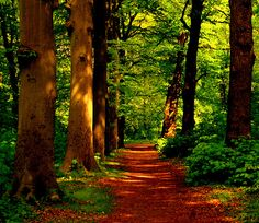 Forest Path, The Netherlands