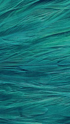 iPhone6papers.co-Apple-iPhone-6-iphone6-plus-wallpaper-vf29-feather-blue-bird-pattern