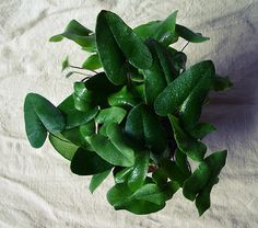 Amazing Unusual Plants To Grow In Your Garden Philadendron Plant, Plant Care, Plant Decor, Plant Leaves, Weird Plants, Unusual Plants, Cool Plants, Large Flower Pots, Different Plants