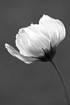 """Simply Beautiful in Black and White"" photo by Penny Meyers.  Fine art prints and greeting cards from Fine Art America."