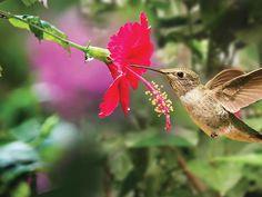 Bird Sanctuaries in Kerala, India @ Sanctuariesindia.com