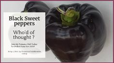 The Tomato Growers Club – The Tomato Specialist Tomato Growers, Varieties Of Tomatoes, Pepper Plants, Tomato Plants, Summer Squash, Stuffed Sweet Peppers, Pumpkins, Watermelon, Things To Do