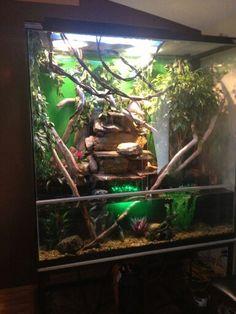 Iguana Chinese Water Dragon Tank Pets Pinterest Chinese Water