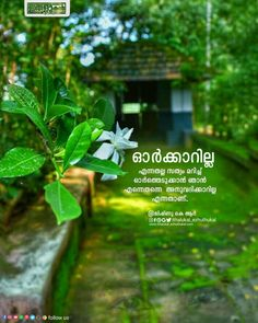 Malayalam Quotes, In My Feelings, Mindfulness, Night