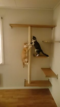 Shelves and support from Ikea. scratching pole made from a drainpipe and sisal rope. * Catshelf catwalk cats shelf shelves wall scratching cattower tower * and like OMG! get some yourself some pawtastic adorable cat apparel! Cat Wall Shelves, Corner Shelves, Ikea Shelves, Room Shelves, Cat Climber, Diy Cat Tree, Cat Playground, Playground Design, Cat Run