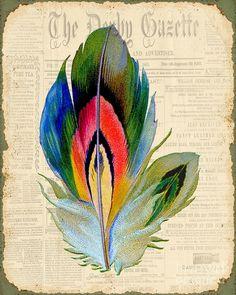 Elegant Feather-b Digital Art