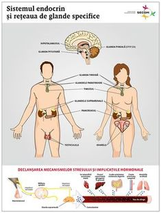 Perspective - Sistemul endocrin, intre discretia absoluta si deranjul major | Secom.ro Health And Beauty Tips, Pink Hair, Good To Know, Health Fitness, Memes, English Grammar, David, Medicine, Varicose Veins