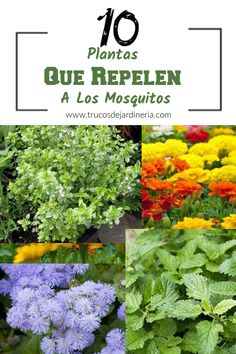 Mosquito Repelling Plants, Interior And Exterior, Herbs, Patio, Green, Hair Styles, Business Ideas, Small Vegetable Gardens, Gardens
