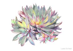 Succulent #2 by Louise De Masi