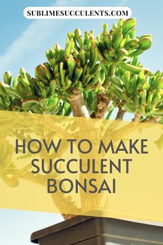 Succulents are ideal for bonsai, so if you're looking for a new project or something interesting to try with your plants, give bonsai a chance. Check out this pin for some great tips on how to make a succulent bonsai! #succulents #indoorgardening #outdoorgardening #gardeningtips #succulentbonsai Succulent Bonsai, Succulent Care, Succulent Gardening, Bonsai Plants, Container Gardening, Gardening Tips, Types Of Succulents, Types Of Plants, Cacti And Succulents