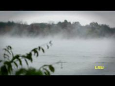 ▶ Foggy, beautiful LSU lakes - YouTube ... Pelicans glide through a cool mist.