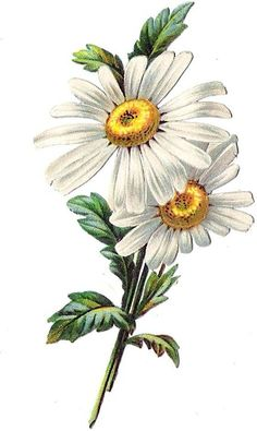 Mail - oblaten@outlook.com: Daisy Flower Drawing, Pencil Drawings Of Flowers, Daisy Art, Flower Sketches, Flower Art, Art Drawings, Illustration Blume, Illustration Botanique, Art Floral