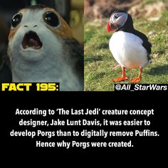 """4,682 Likes, 58 Comments - Star Wars (@all_starwars) on Instagram: """"I could've done with less Porgs, but they didn't bother me AT ALL. Every time they came on screen,…"""""""