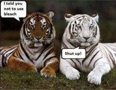 animal Tiger eine schöne Raubkatze!
