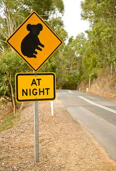Koala warning sign, Australia - photo by John White, via Flickr