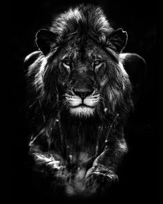 Monochrome Animal Photography By Lukas Holas Animal Photography - Breathtaking black and white animal portraits by lukas holas