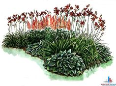 1. Хоста Зибольда (Hosla sieboldiana) 2. Лилейникгибридный (Hemerocallis x hybrida 'Golden Orchid) 3. АстильбаАрендса (Astilbe х aaiendsii 'Federsee')
