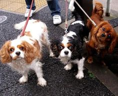 most expensive pets in the world - Google Search