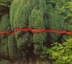 Nils Udo – Art in Nature