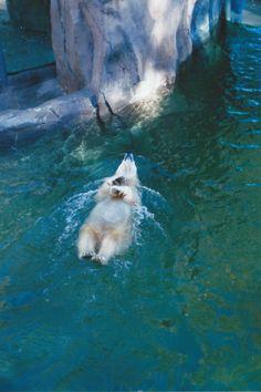 Ah!!!!! Omaha Henry Doorly zoo