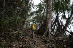 Trail La Leona Ranger Station and the Sirena Station in Corcovado National Park, Osa Peninsula, Costa Rica