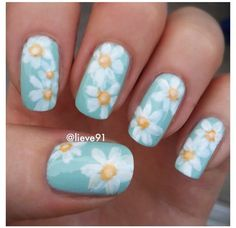 White daisies over pastel blue