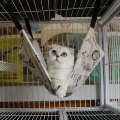 Whitelotous Pet Hammock Cat Bed Cat Mat Cat Litter Cat Favorite Hammock -- Be sure to check out this awesome product.